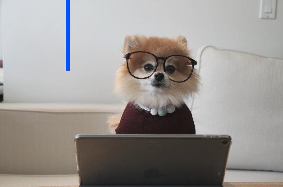 Šuniukas prie savo kompiuterio