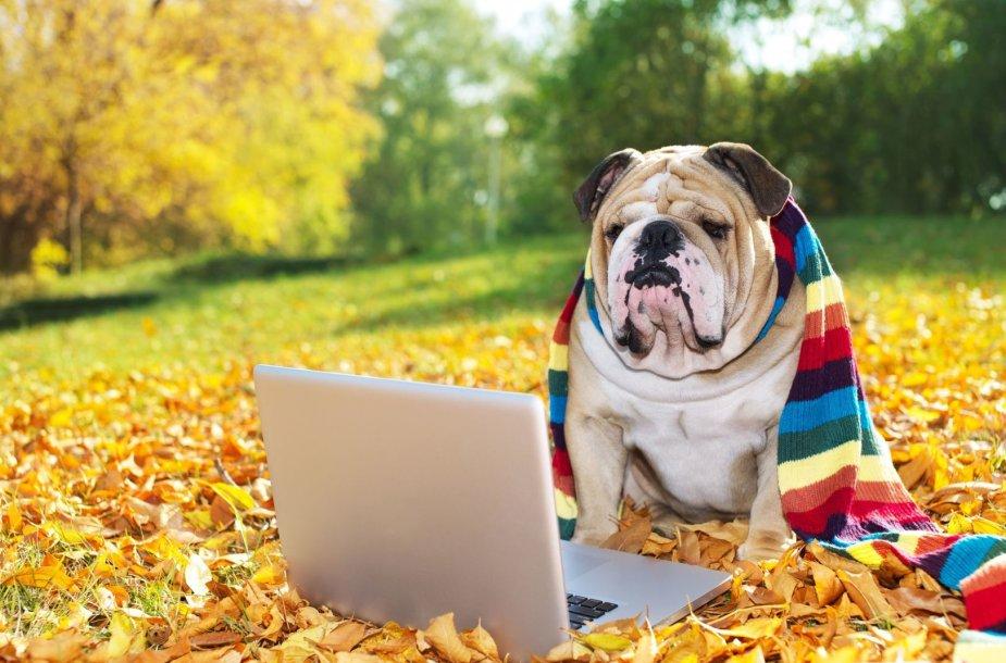 Šuo žiūri į kompiuterį