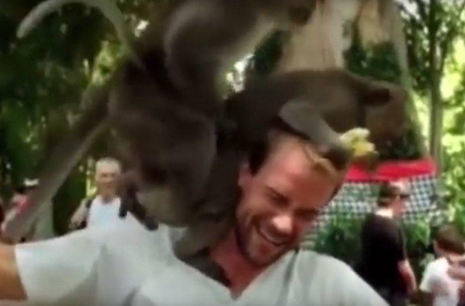 Beždionės užsiėmė seksu ant turisto galvos.