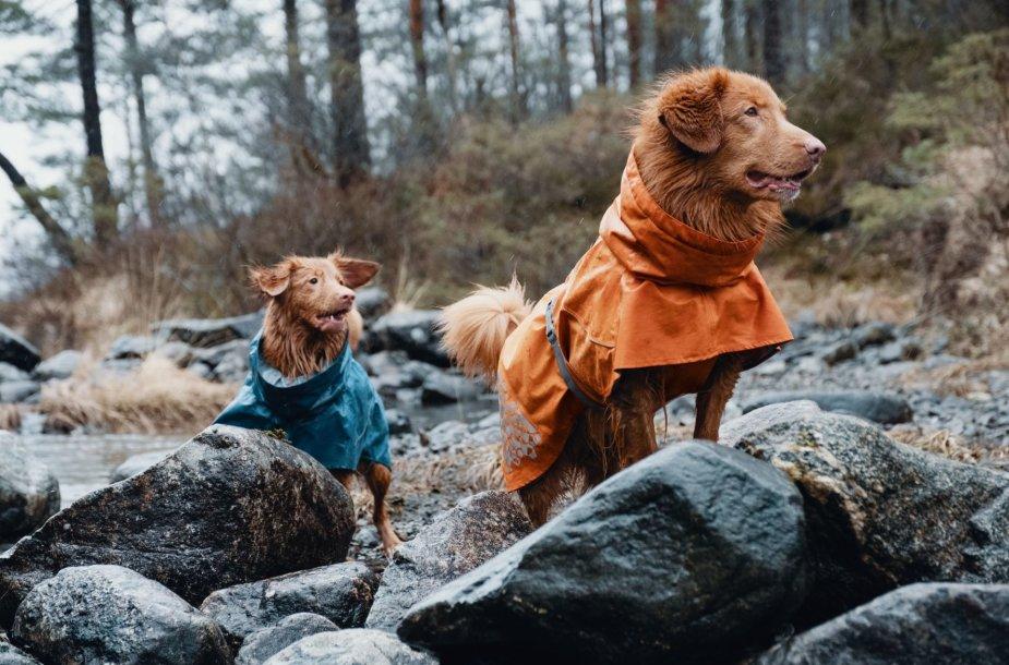 Apranga šunims