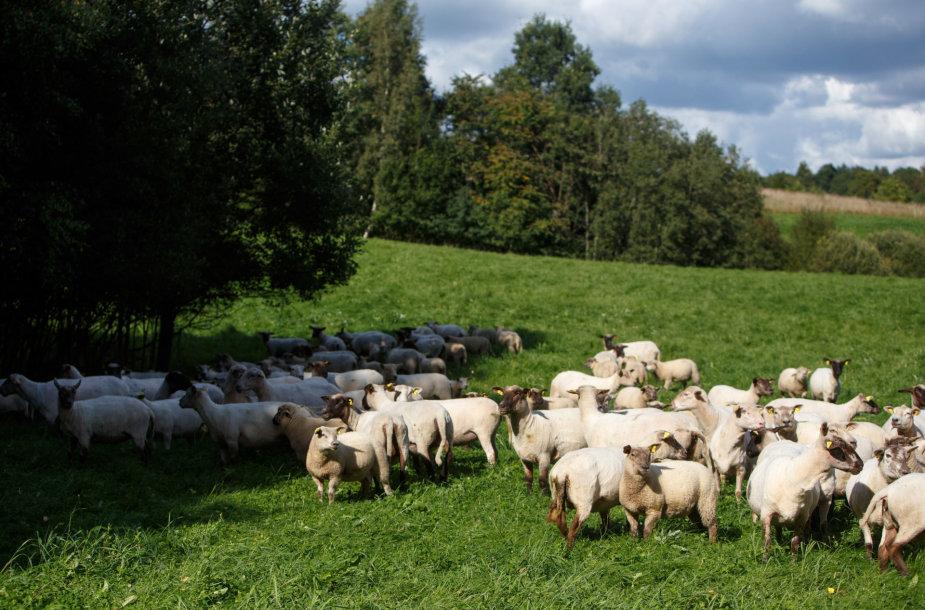 Ekologinis Jusių ūkis