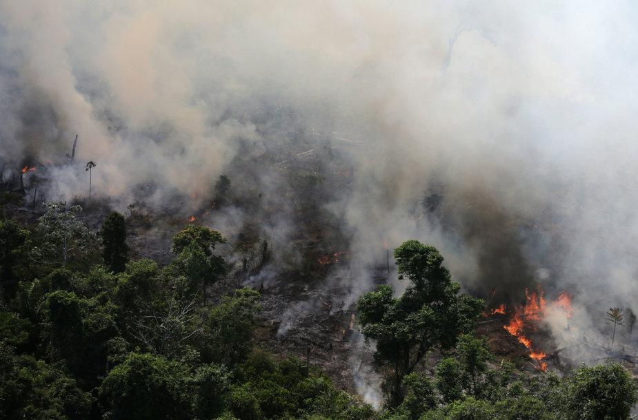 Gaisras Amazonės miškuose