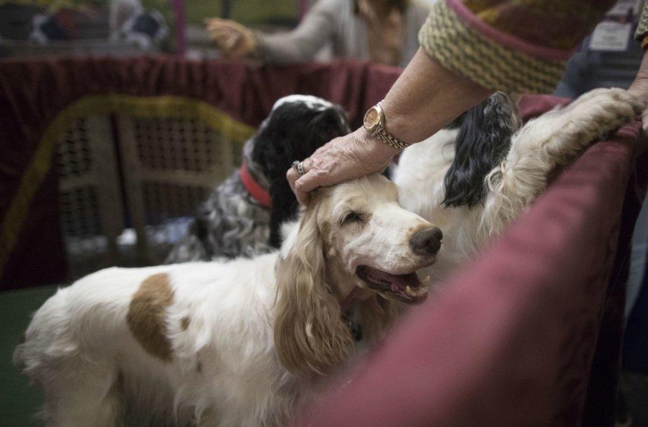 Vestminsterio šunų ir kačių paroda
