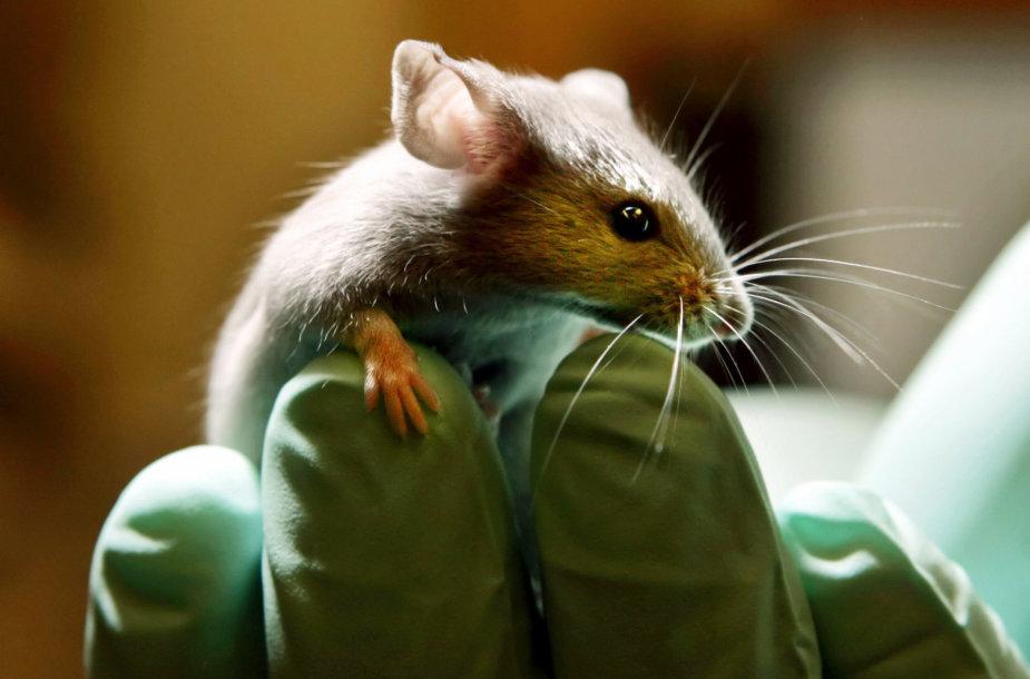 Laboratorinė pelė