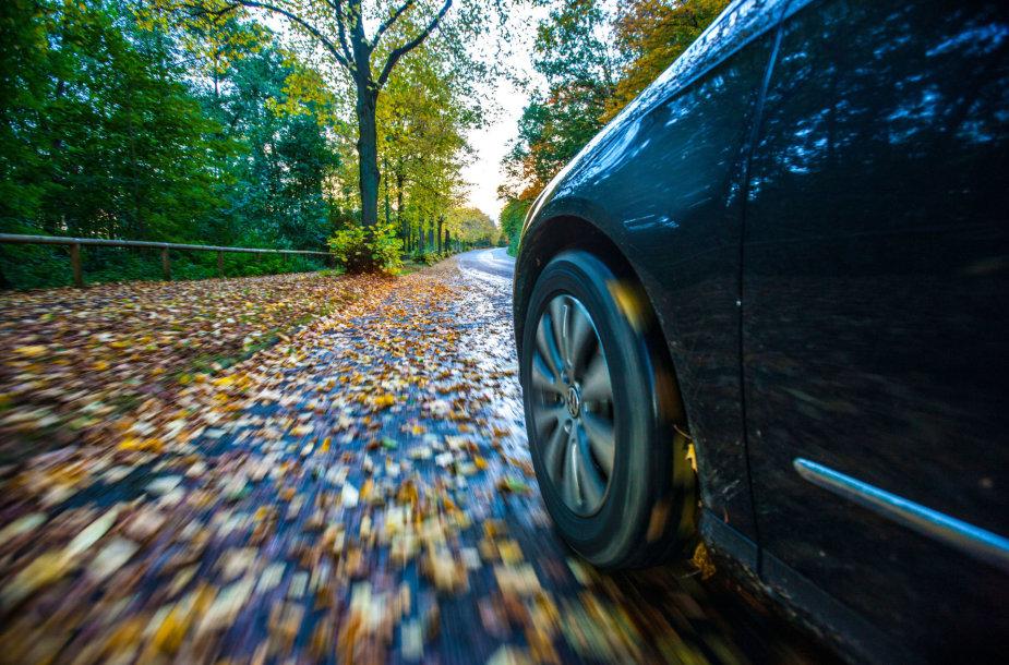 Rudenisškas kelias, nuklotas šlapiais lapais