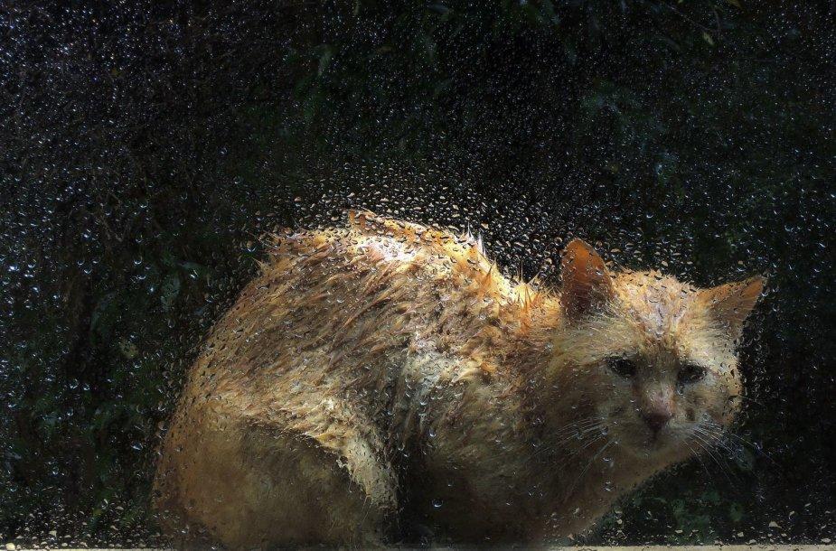 Šlapia katė