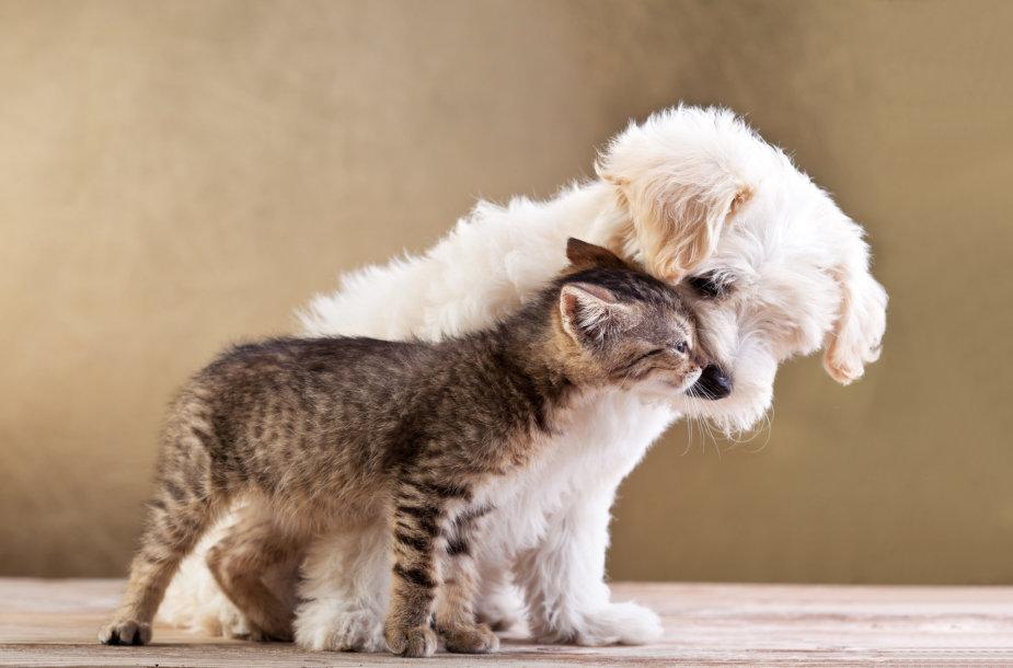 Šuo ir kačiukas