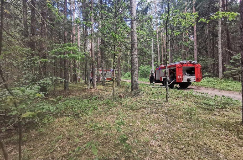 Gaisras Prienų miške