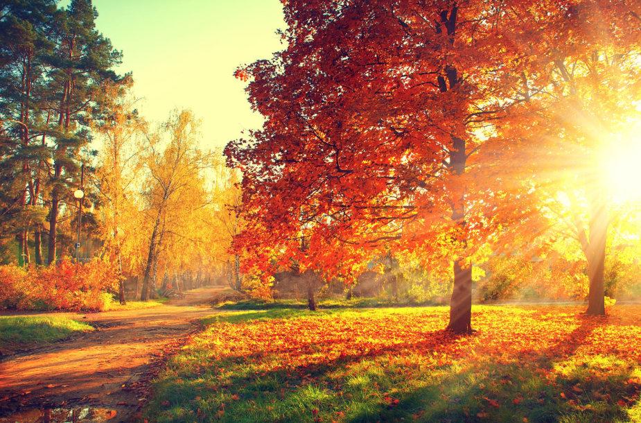 Miškais ateina ruduo