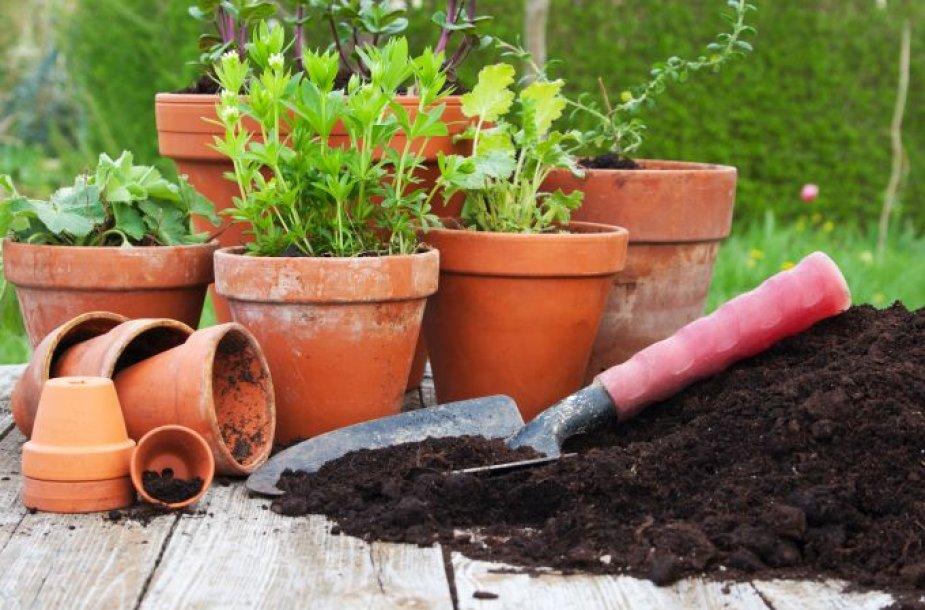 Metas persodinti augalus!