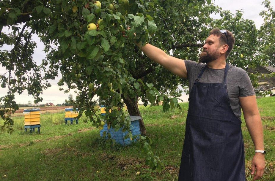 Marijos trobelės įkūrėjas Mindaugas Balčiūnas skina obuolius
