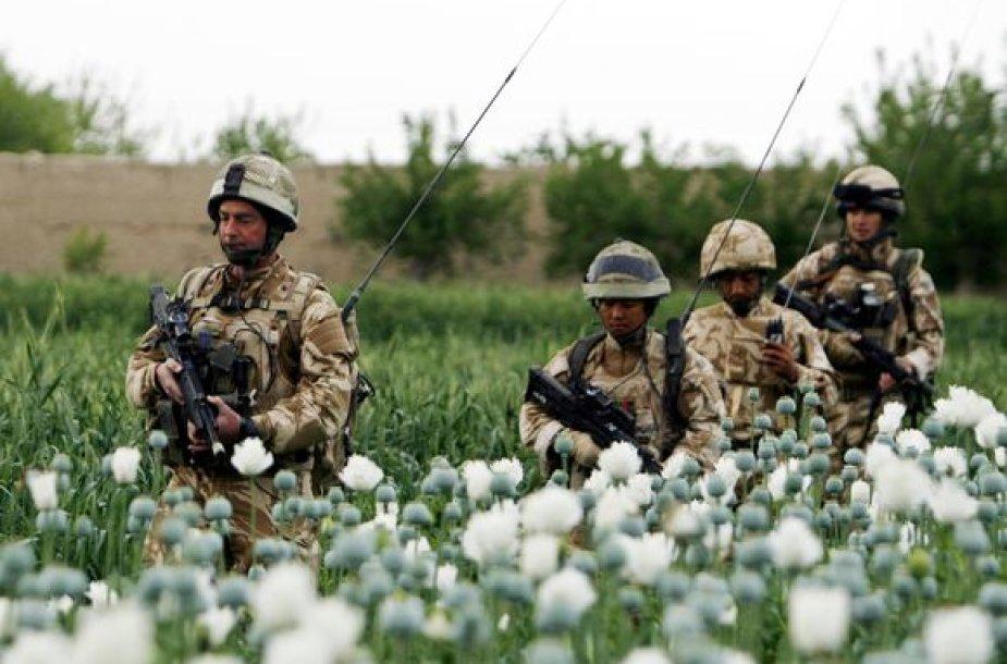 Britų kariai patruliuoja Afganistano aguonų lauke.