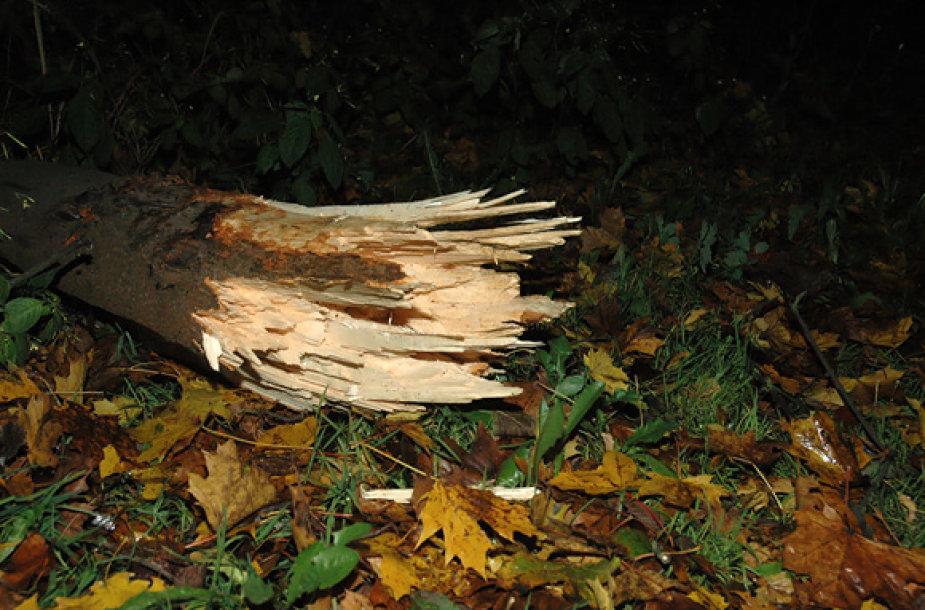 Nulaužtas medis