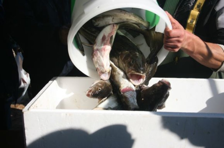 Vienintelės žuvies, menkės, kepenimis, kurias žmonės naudoja maistui bei gyvūnų pašarams, bus uždrausta prekiauti ar kitaip realizuoti nuo rytdienos.
