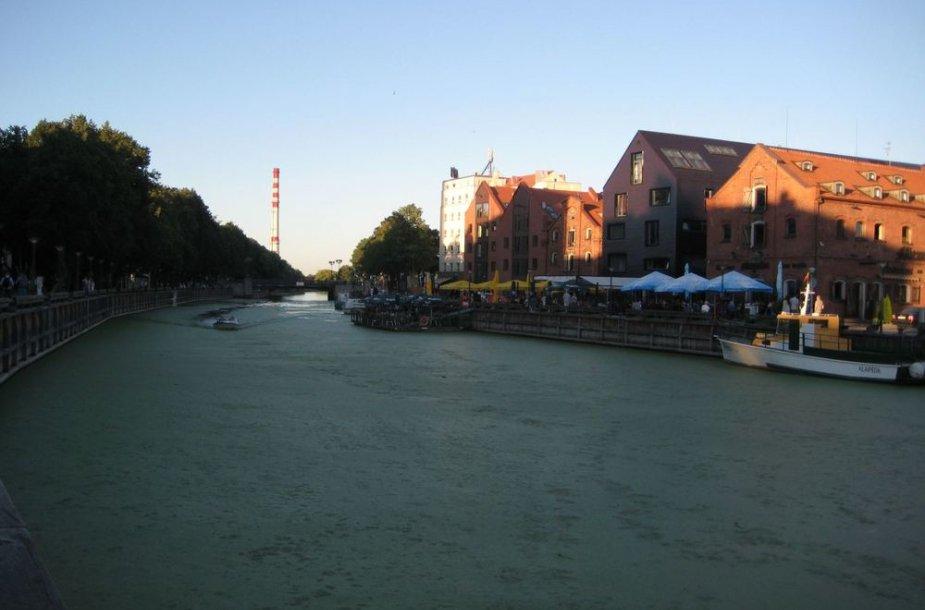 Danės upė pasidengė stora dumblių pluta.