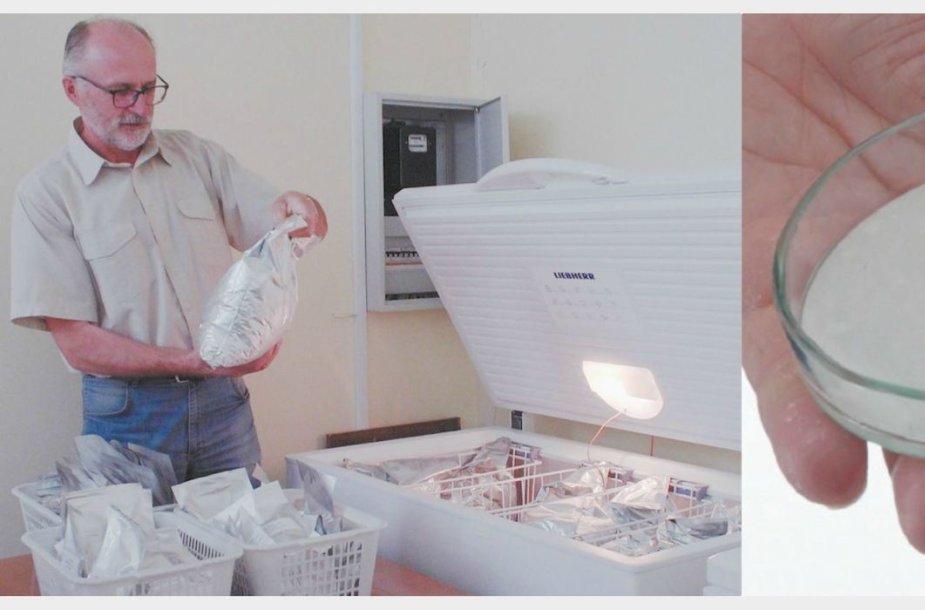 Augalų genų banko vyriausiasis patarėjas dr. Bronislovas Gelvonauskis rodo, kokiomis sąlygomis saugomos pupų sėklos