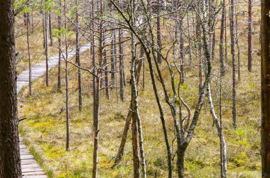 Čepkelių valstybiniame gamtiniame rezervate