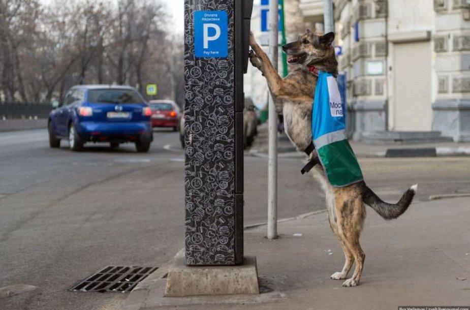 Automobilių parkavimą kontroliuoja ir šunys