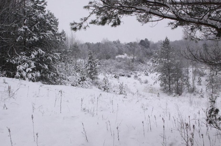 Žiema Tauragėje