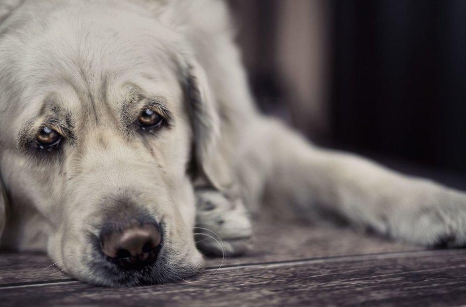 Liūdnas šuo