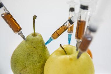 Genetiškai modifikuotas organizmas (GMO)