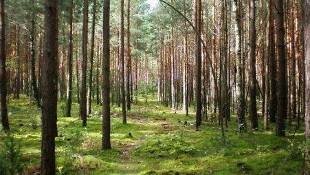 Balbieriškio miškas