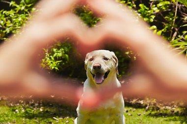 Gyvūnų teisės