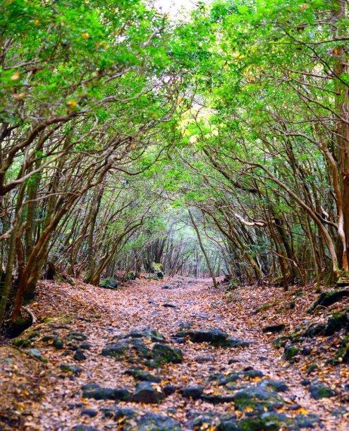 Aokigahara miškas