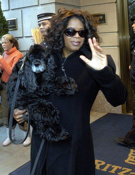 Foto naujienai: Oprah Winfrey paskyrė laidą savo mirusiam šuniui
