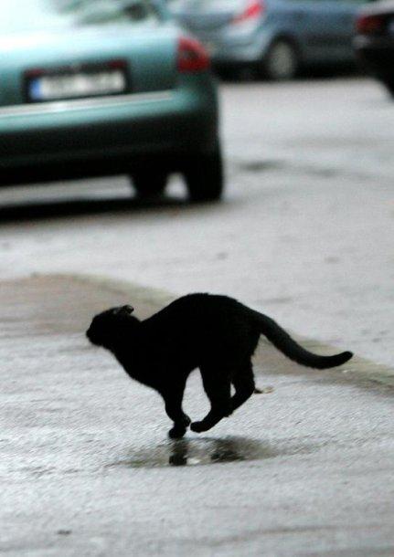 Kui kass linnatänaval jookseb, viivad loomapüüdjad ta tasuta ära. On loom aga eramaal, tuleb äraviimise eest maksta.